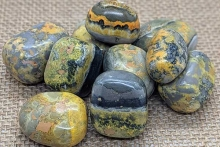 Learn about Bumble Bee Jasper